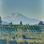 view of Mt. Adams